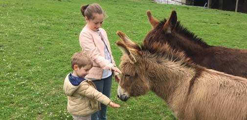 Découverte des ânes en famille au Pays Basque